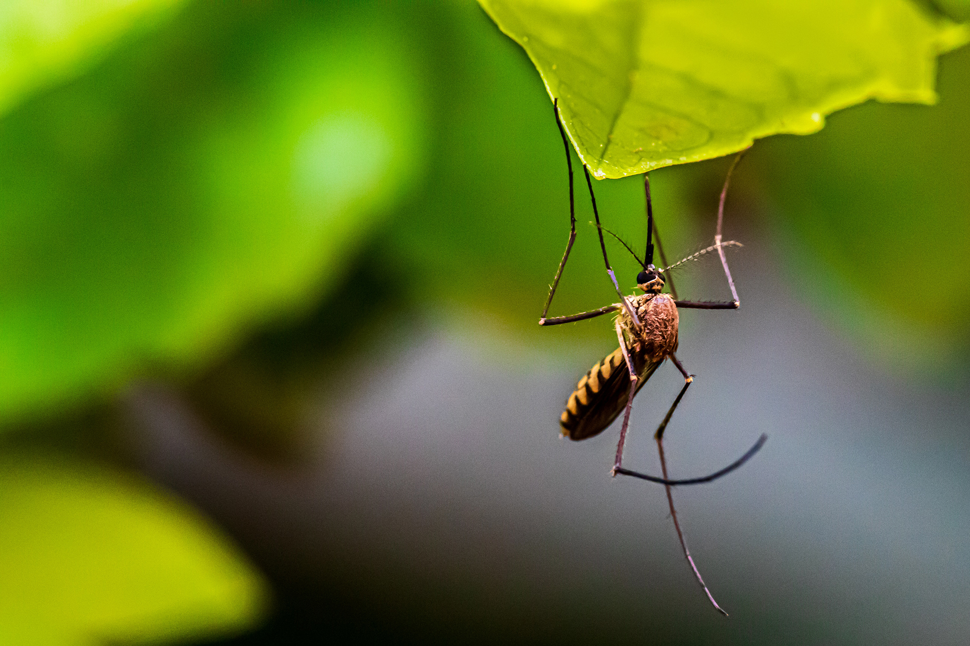 Reclaim Your Yard: How to Get Rid of Mosquitos - Houseman Pest