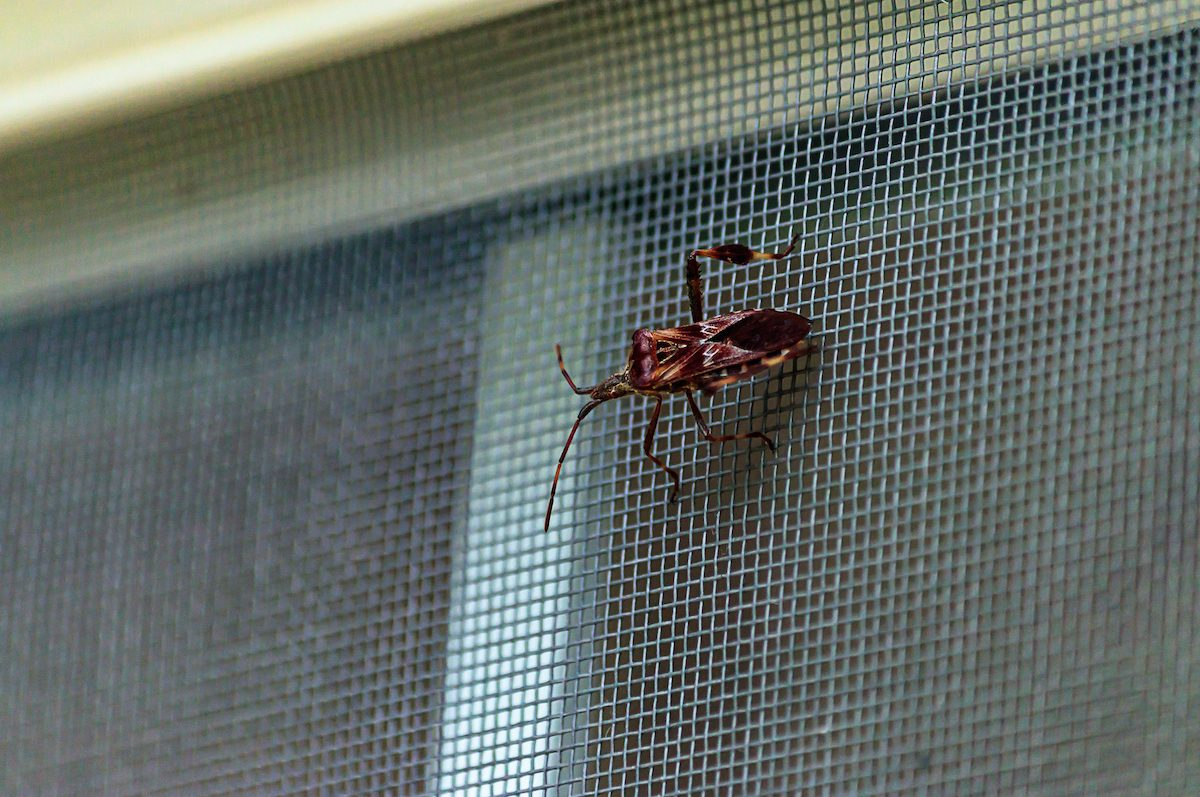 how do bugs get into your home